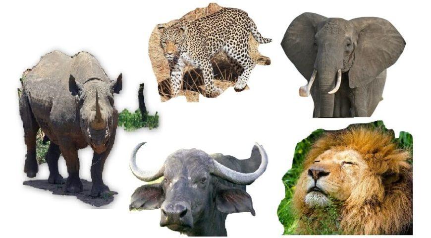 the big five animals southern valley safaris blog. Black Bedroom Furniture Sets. Home Design Ideas