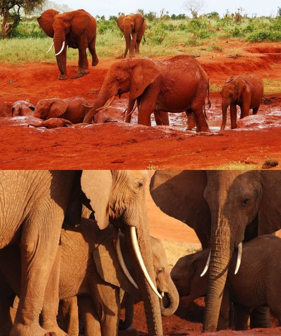 1 Day Tsavo East Safari