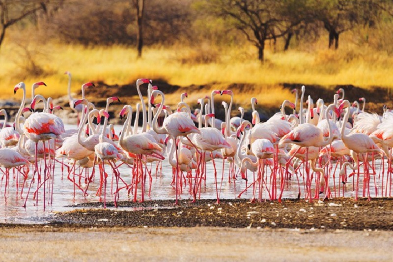 2 Days Lake Bogoria Safari