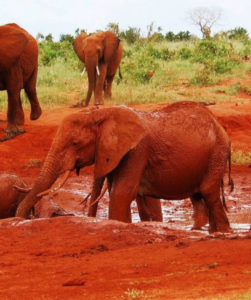 2 Days Tsavo East Safari