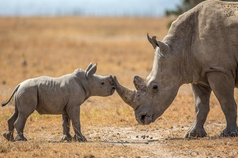 3 Days Ol Pejeta Conservancy Safari