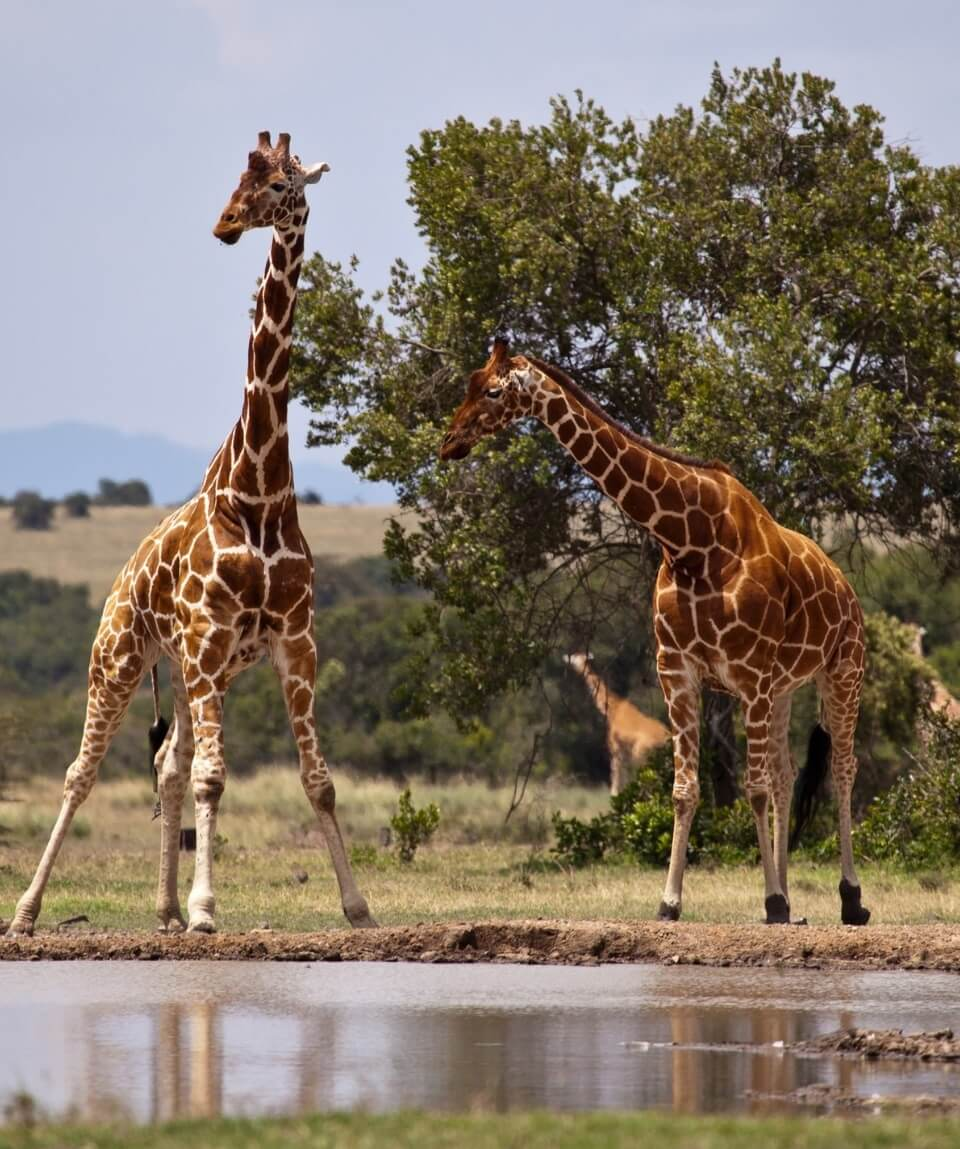 3 Days Samburu Safari Package