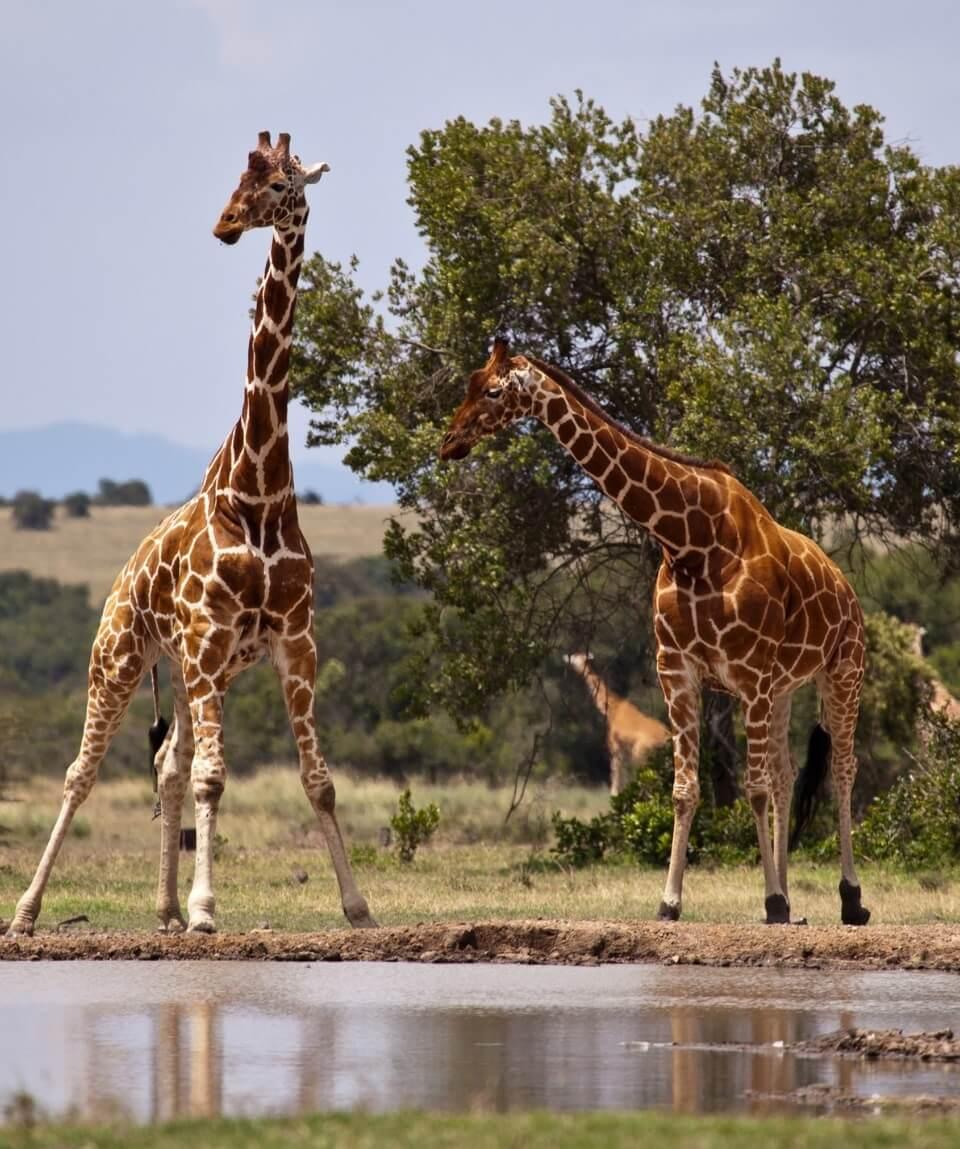 3 Days Samburu Safari Package