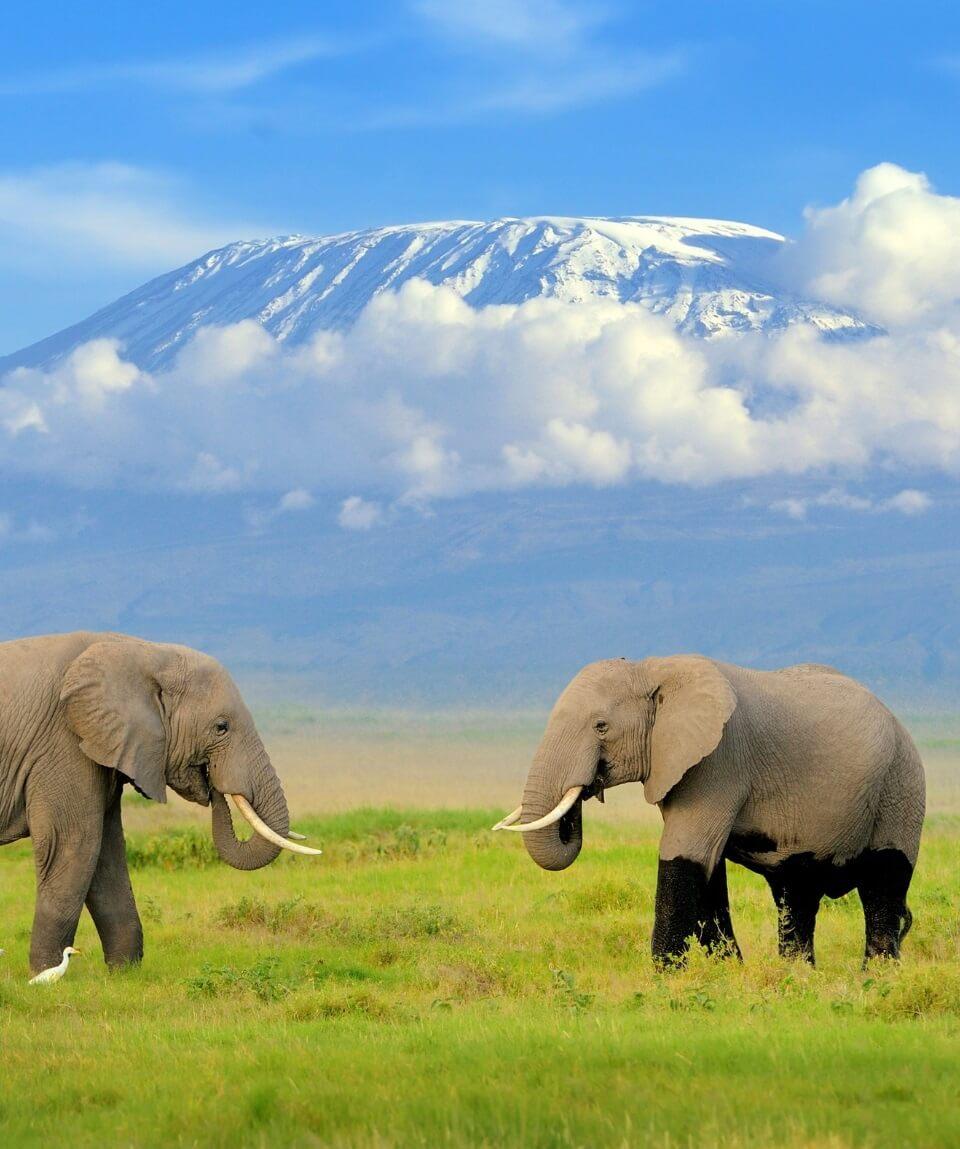 Amboseli Lake Nakuru Masai Mara Wildlife Safari