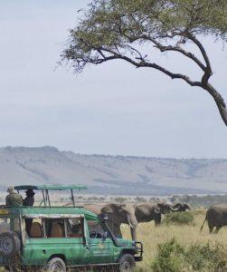 Masai Mara Safari Experience