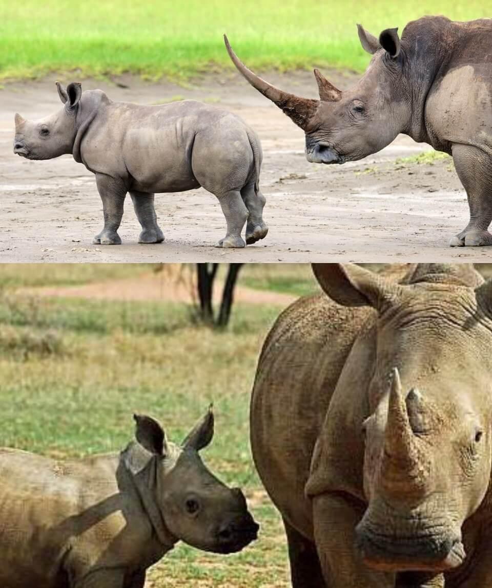 Sweetwaters Safari Kenya
