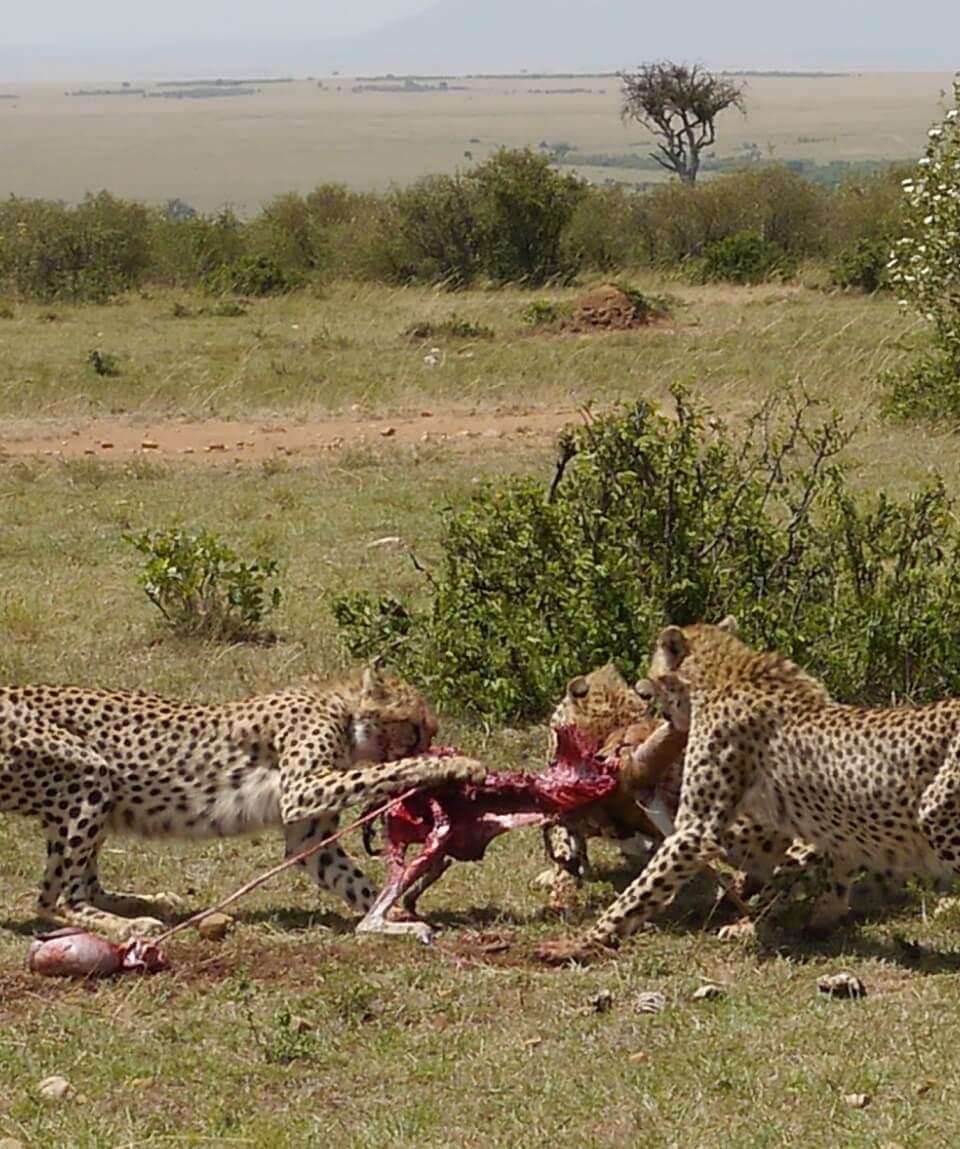 Masai Mara Holiday Safari