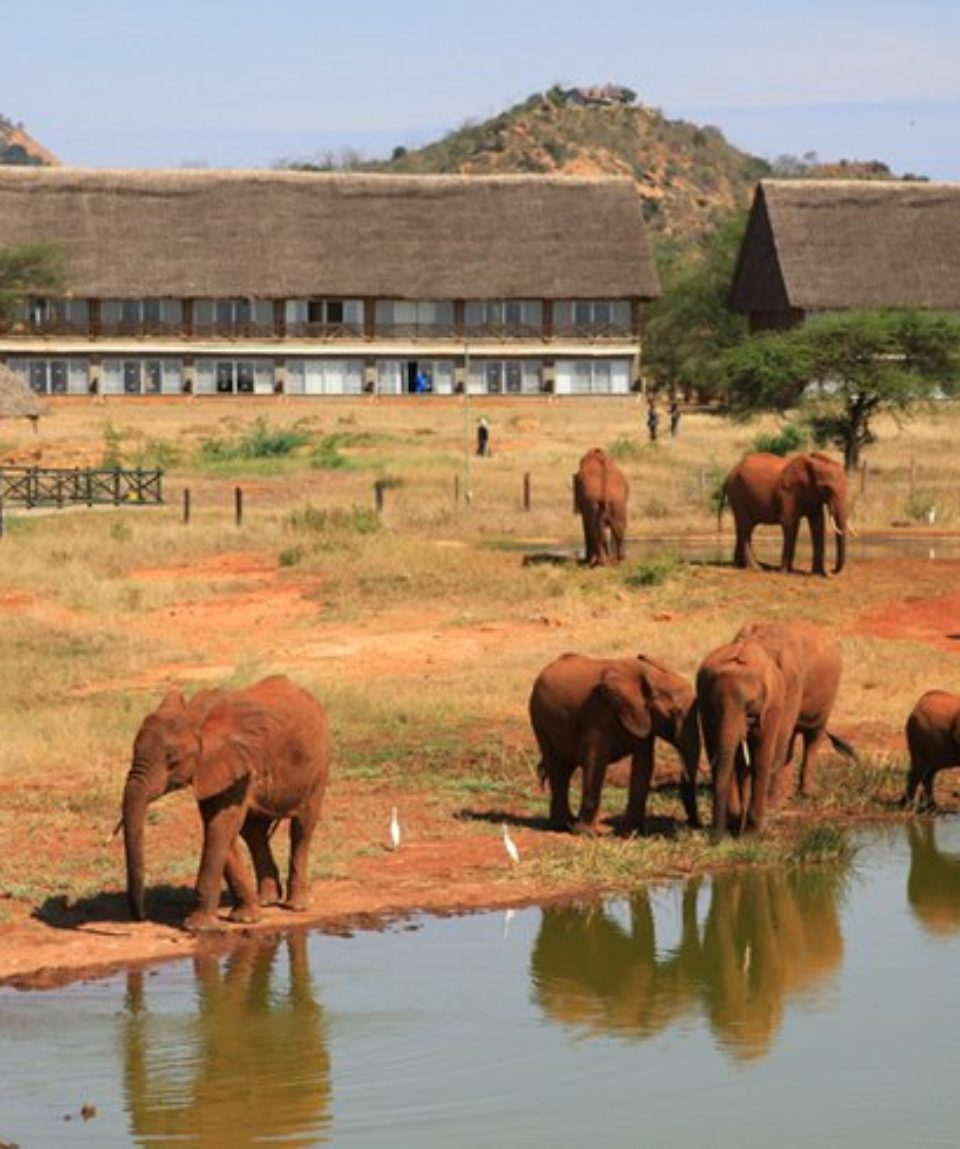 3 Days Tsavo East - West National Park Safari