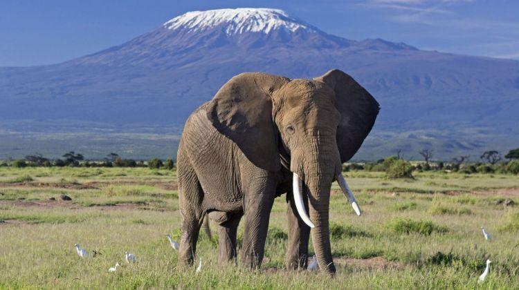 Amboseli safari 3 days