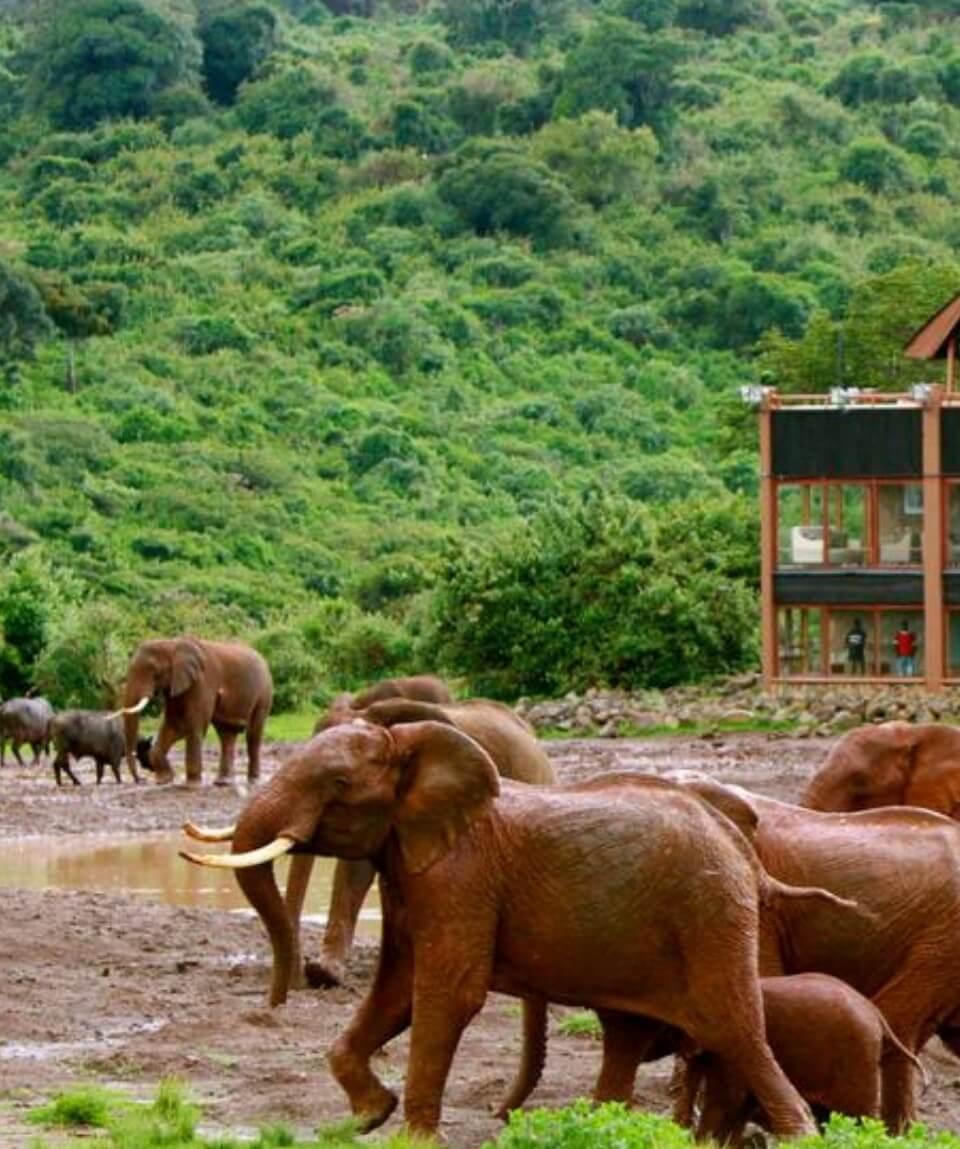Kenya Wildlife Safari Experience
