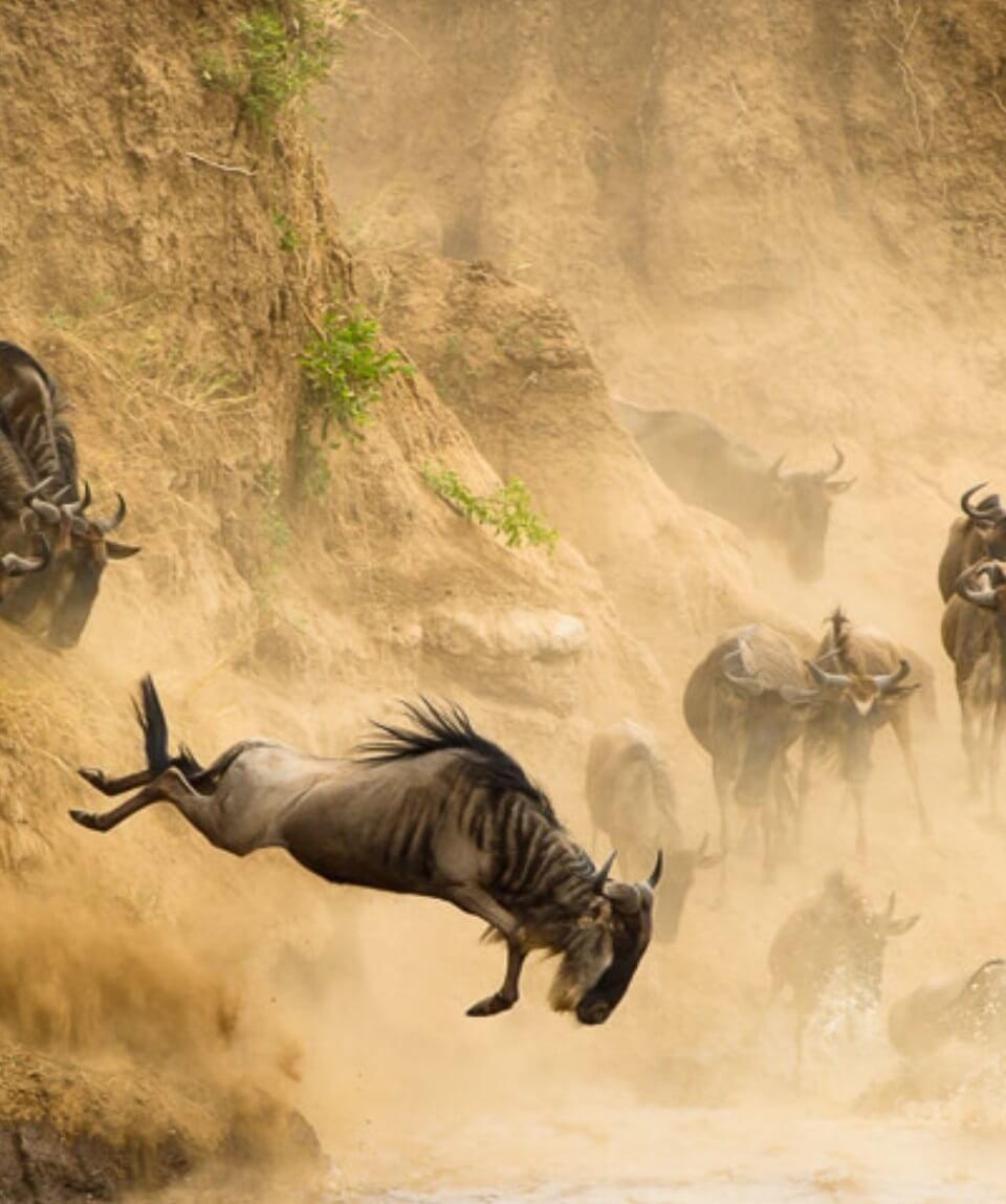Mara Migration