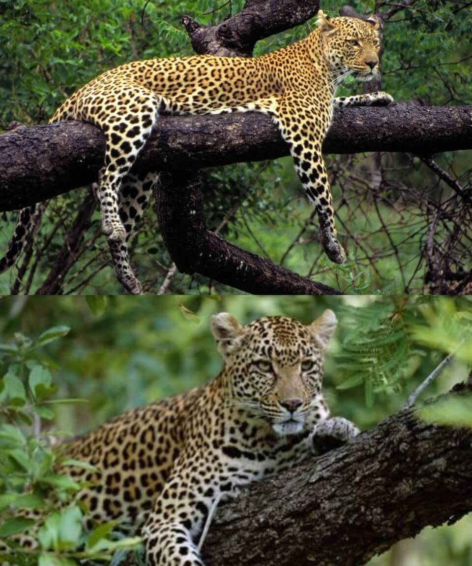Masai Mara Magnificent Getaway