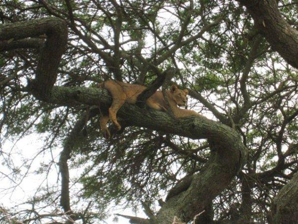 Nairobi National Park Visit
