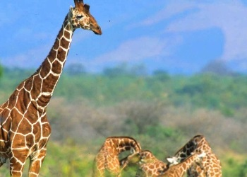 Samburu 3 Days Safari Package