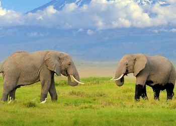amboseli 1 Night Safari