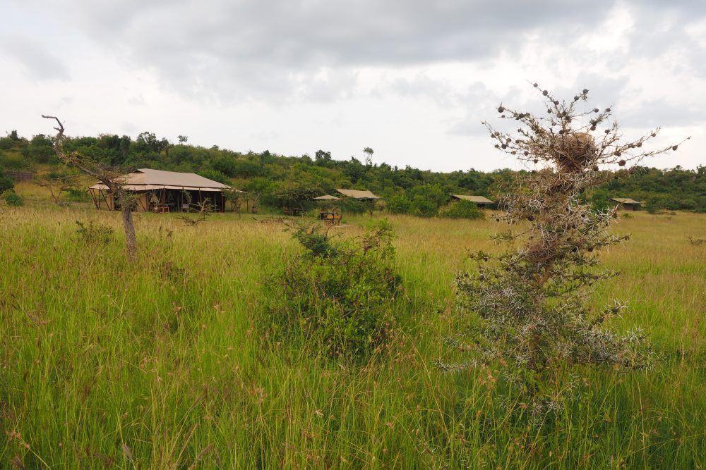 wilderness camp mara naboisho