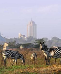 Nairobi National Park Half Day Tour