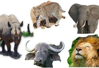 The-Big-Five-Animals